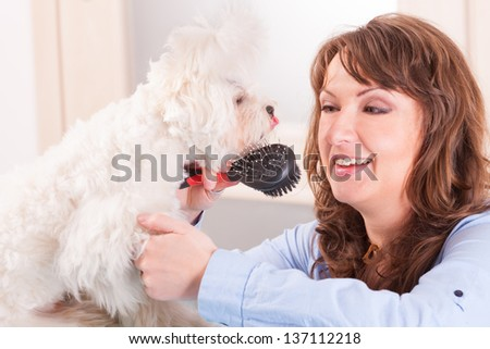 Smiling woman grooming a dog purebreed maltese. - stock photo