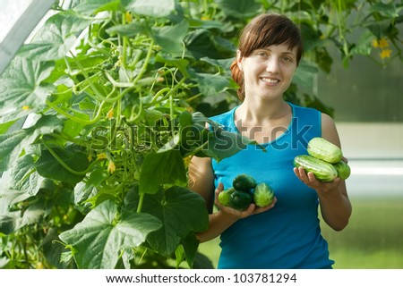 Smiling woman picking cucumber in the greenhouse - stock photo