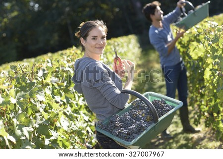 Smiling young woman holding basket of grape in vineyard