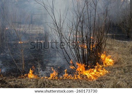 smoke and fire in the woods near the young tree - stock photo
