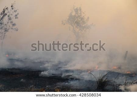 Smoke field after wildfire. - stock photo