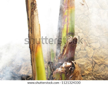 Smoke from fire and burnt banana trees