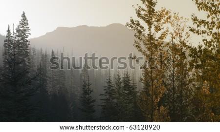 Smoky mountain forest scene - stock photo