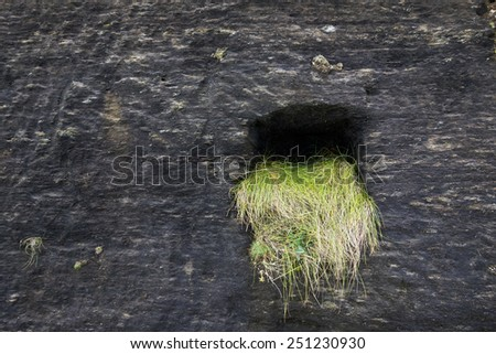 Smooth dark rock with a hole and green grass hanging out of it.  - stock photo