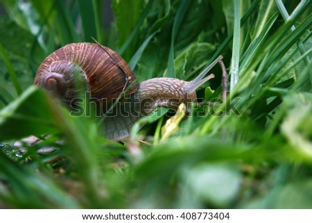 Snail after the rain goes to green grass - stock photo