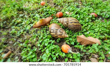Snail and orange fruits on green lawn