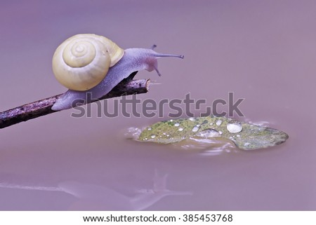 Snail and water - stock photo