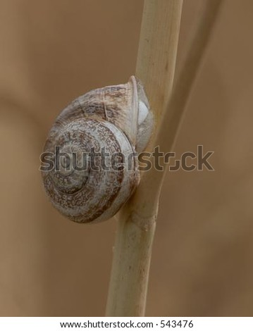 Snail Attached to Branch - stock photo