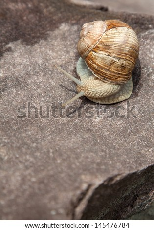 snail basking on a rock close-up in nature