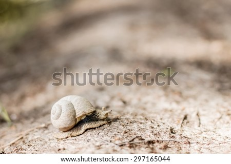 Snail carrying its house. Image with selective focus - stock photo
