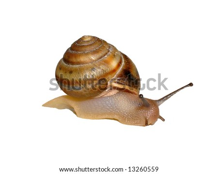 snail close-up isolated