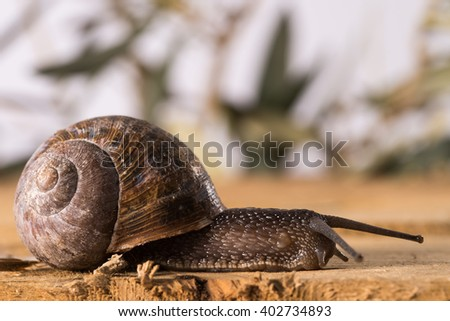 Snail close up on wooden block