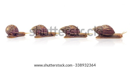 snail collection isolated