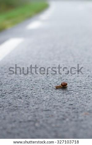 Snail crawl on wet asphalt road, selective focus - stock photo