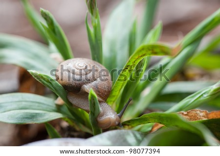 Snail Crawling through Plant - stock photo