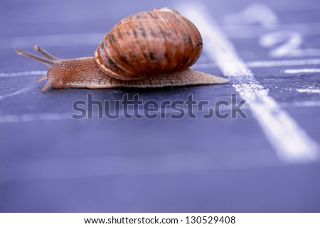snail crosses the finish line alone as winner - stock photo