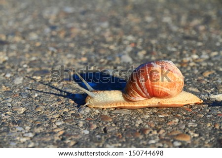 Snail crossing an asphalt road - stock photo