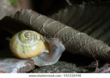Snail eating leaves