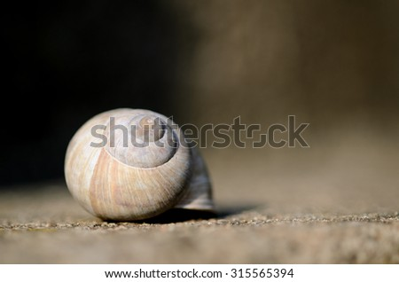 Snail empty shell. Extremely shallow DOF. - stock photo