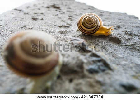 snail, garden, isolated, animal, slow, white, shell, background, nature, mollusk, closeup, slimy, slug, food, helix, macro, spiral, gastropod, brown, slime, wildlife, one, green, wet