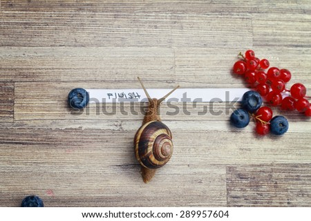 Snail going over the finish line - stock photo