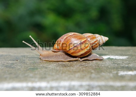 Snail in conch on the facing wall - stock photo