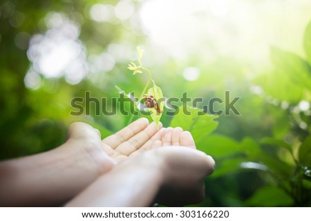 Snail in human hands on blurred abstract green forest, desert over colorful sunset background. Ecology concept. World Environment Day concept - stock photo