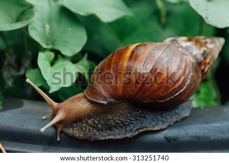 Snail in Natural background.