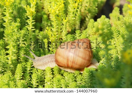 Snail in small trees - stock photo