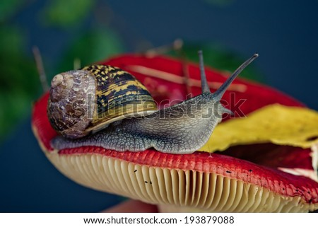 Snail in the autumn forest with mushroom and moss - stock photo