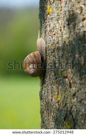 snail in the garden on a tree - stock photo