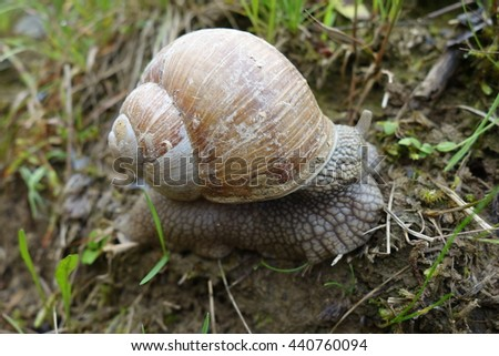 snail in the garden on the grass