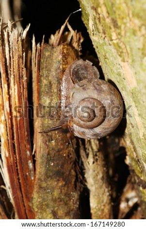 Snail in tropical forest - stock photo