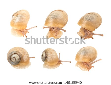 snail isolated on white background