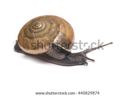 Snail isolated on white background. Focus point shooting.
