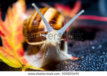 Snail, leaf and autumn