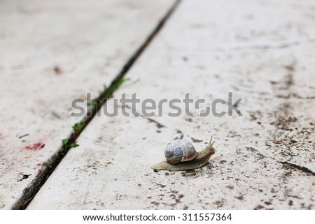 Snail on a concrete pavement. Close up, selective focus. - stock photo