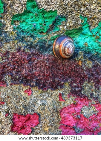 Snail on a graffitti wall