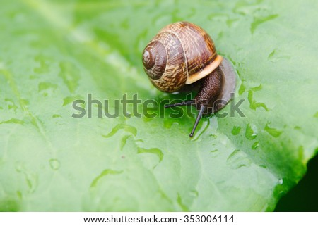Snail on a green leaf - stock photo
