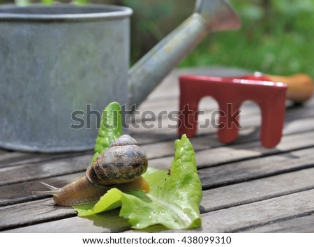snail on a leaf with little gardening  tools on a plank in garden  - stock photo