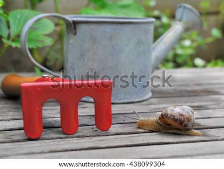 snail on a plank in garden with little gardening tools - stock photo