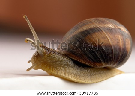 Snail on a red background