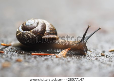 snail on asphalt