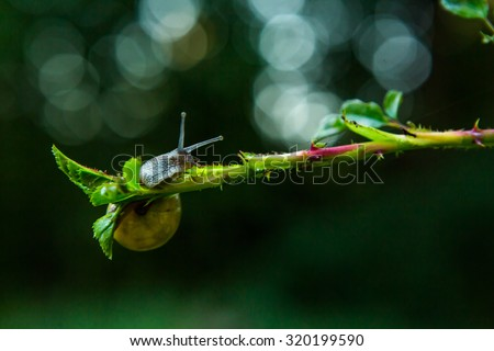 Snail on branch with black background - stock photo