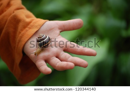 Snail on child hand on green background - stock photo