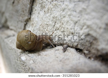 snail on cracked wall