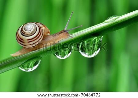 Snail on dewy grass - stock photo