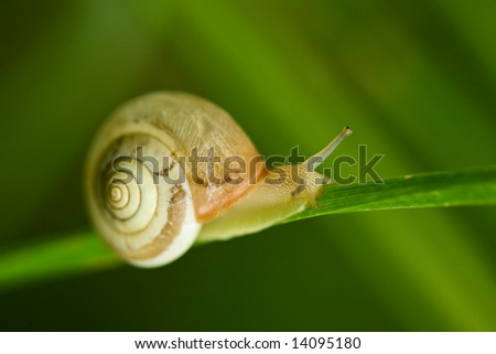 snail on green - stock photo