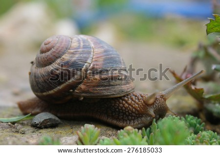 Snail on green garden