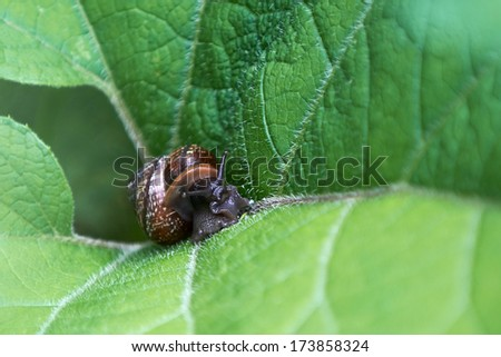 Snail on green leaf - stock photo